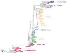 遺伝系統樹.jpg